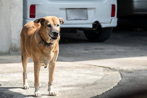 Boze hond die zich thuis bevindt