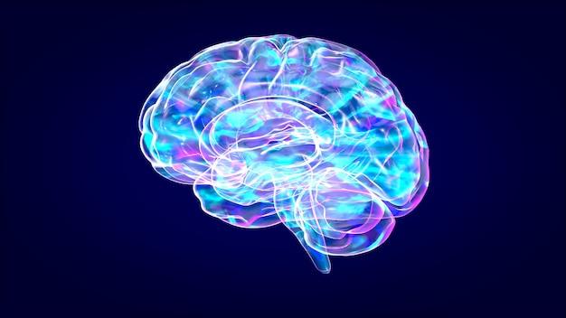 Brain xray, menselijke anatomie, 3d-geïllustreerde neuronen
