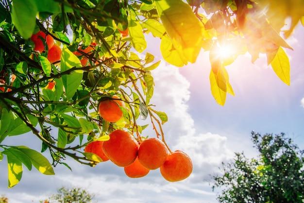 Branch oranje boom.