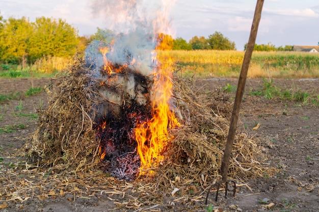 Brand in de tuin, onkruid wordt verbrand na het oogsten. een uitzicht op de natuur.
