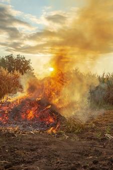 Brand in de tuin, onkruid wordt verbrand na het oogsten. uitzicht op de natuur en zonsondergang.