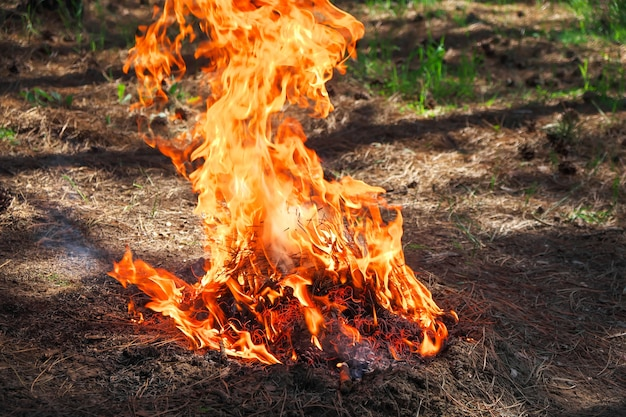 Brand in een bos gemaakt door iemand. vlam voor picknicktijd in de lente