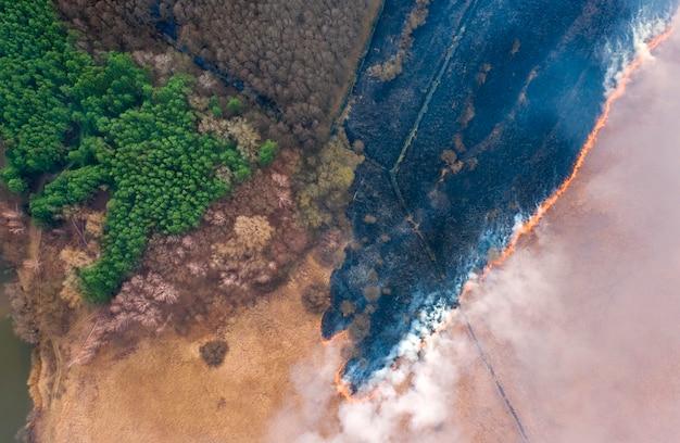 Brandend droog gras dichtbij het bos. een ecologische ramp, met schadelijke emissies in de atmosfeer.