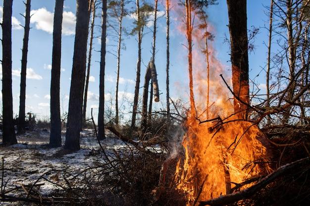 Brandend vuur. het vreugdevuur brandt in het bos. het patroon van brandend vuur. vreugdevuur om te koken in het bos. droge takken branden. toeristische brand in het bos. het patroon van brandende takken