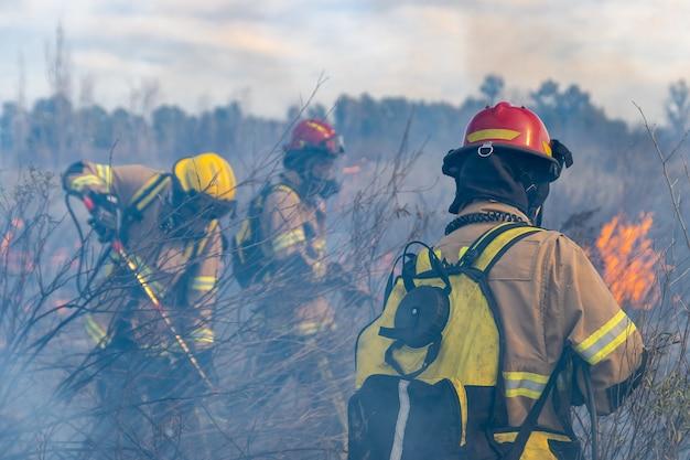 Brandweerlieden blussen een brand in het bos