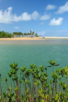 Braziliaans strand en angrove bij barra de camaratuba beach bij joao pessoa paraiba brazil