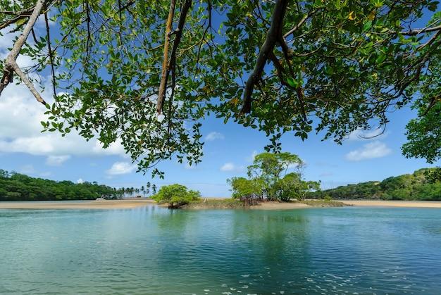Braziliaans strand en angrove bij barra de camaratuba beach bij joao pessoa paraiba brazil Premium Foto