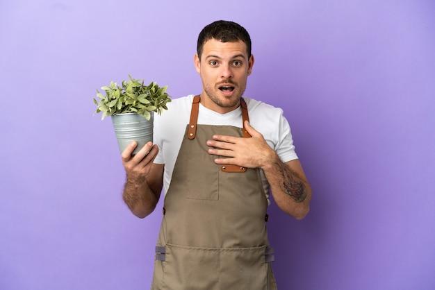 Braziliaanse tuinman die een plant over een geïsoleerde paarse achtergrond vasthoudt, verrast en geschokt terwijl hij naar rechts kijkt