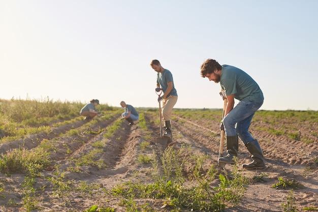 Brede kijkhoek op werknemers grond graven met schoppen en gewassen planten op groenteplantage buiten verlicht door zonlicht, kopie ruimte