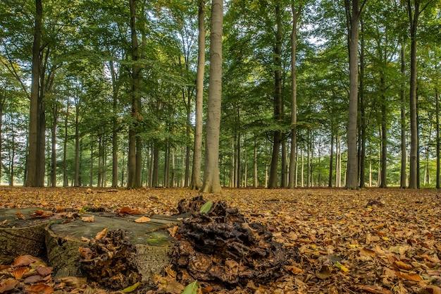 Brede opname van een bos vol hoge bomen op een bewolkte dag