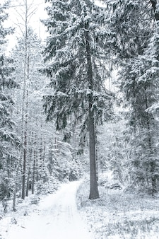 Breed pad in het bos in een winterdag