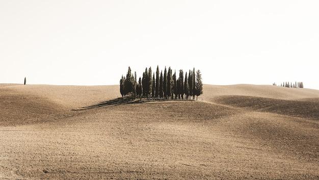Breed schot van pijnbomen in een woestijn veld onder de heldere hemel