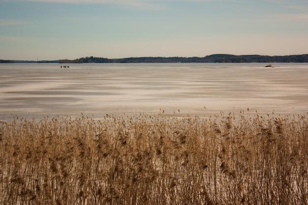 Breed schot van tarweveld in de buurt van een zanderige kust met berg in de verte onder een heldere hemel