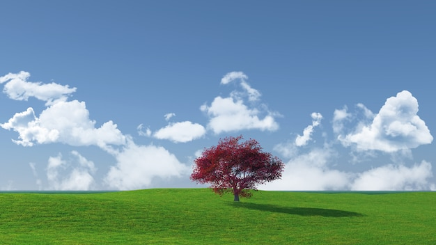 Breedbeeld boomlandschap