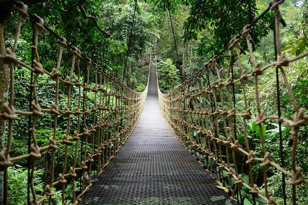 Bridge rainforest hangbrug, het oversteken van de rivier, ferriage in het bos