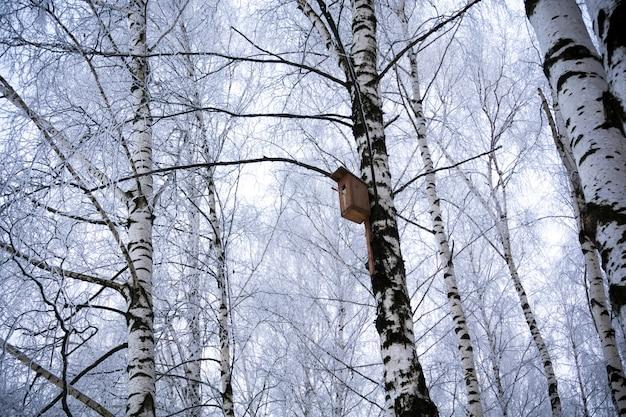 Bridhouse op berkboom in de winterpark