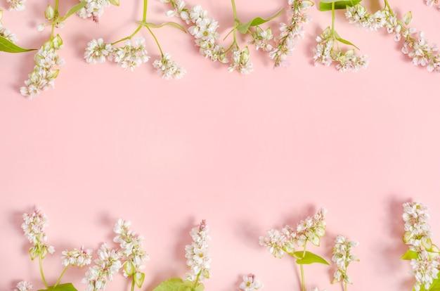 Briefkaartachtergrond met witte boekweitbloemen op een roze achtergrond met exemplaarruimte.