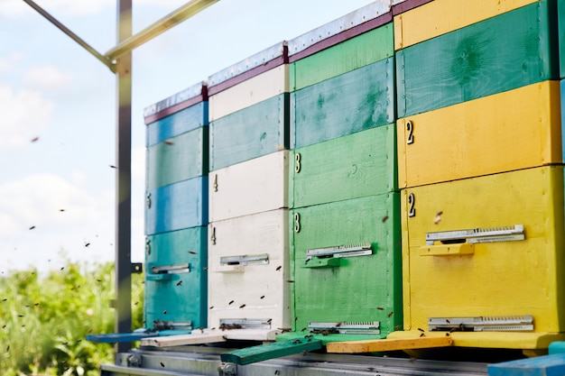 Bright hive boxes in bijenteelt