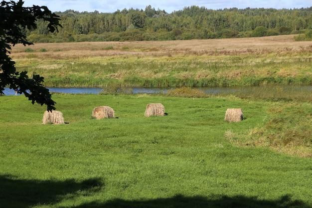 Briketten van hooi op groen gras rivier gele velden en bos aan de horizon