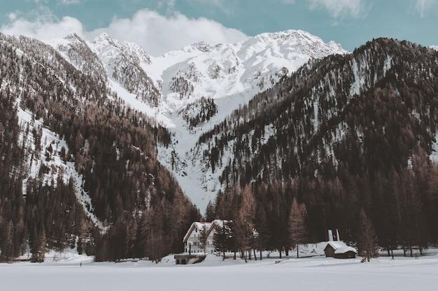 Brown forest in de buurt van white cabin