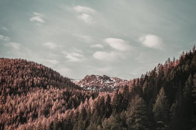 Brown leafed bomen bovenop de berg