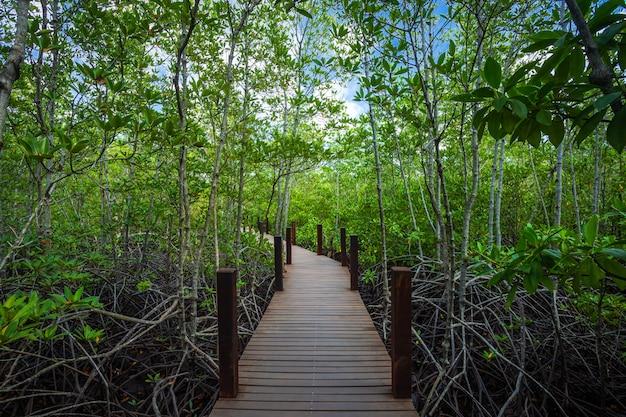 Brug houten het lopen manier in de bosmangrove in chanthaburi thailand.