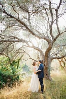 Bruid en bruidegom knuffelen in de buurt van een mooie oude olijfboom in een olijfgaard Premium Foto