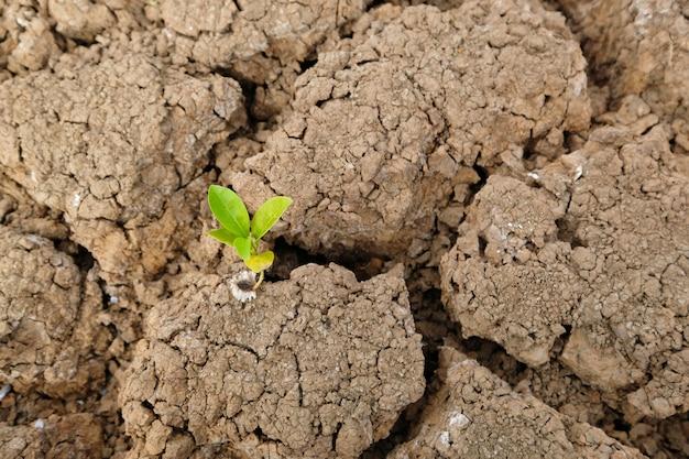Bruin bodemoppervlak is gebarsten en groene bomen die van dor komen. opwarming van de aarde concept. gebarsten aarde textuur.
