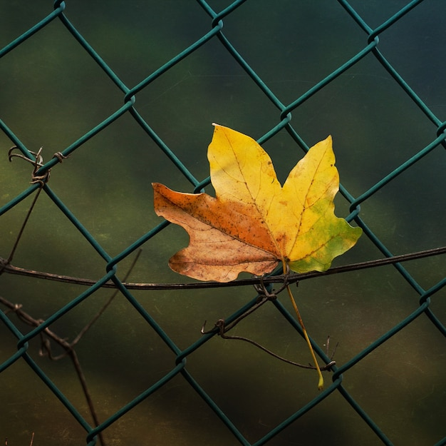 Bruin droog blad in de natuur in het winterseizoen