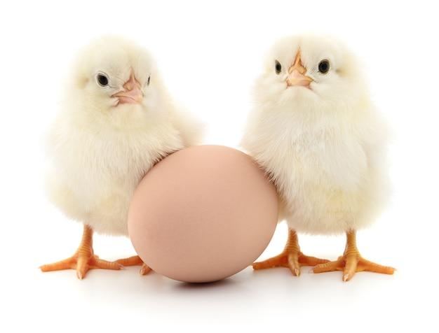 Bruin ei en twee kippen geïsoleerd op een witte achtergrond