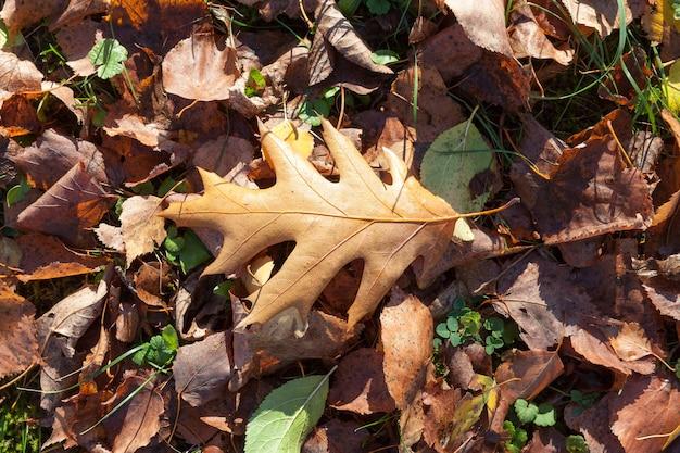 Bruin eikenblad dat op gevallen bladeren en groen gras ligt