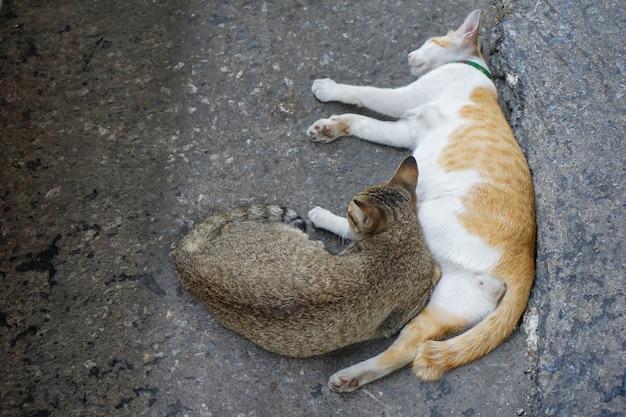 Bruin en wit-oranje lieve 2 katten zitten en slapen samen naast elkaar op straat.