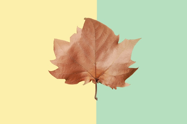 Bruin esdoornblad op gele en groene achtergrond
