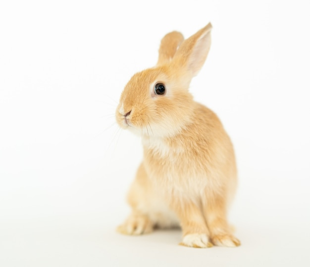 Bruin geel klein harig konijnkonijntje