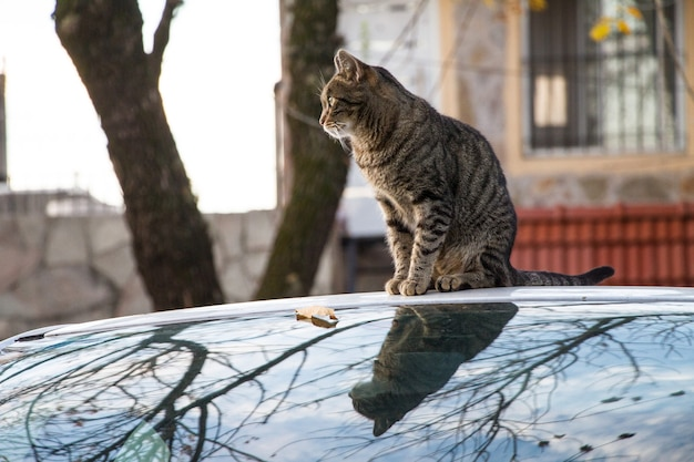 Bruin gestreepte kat, zittend op een auto vastgelegd in de herfst