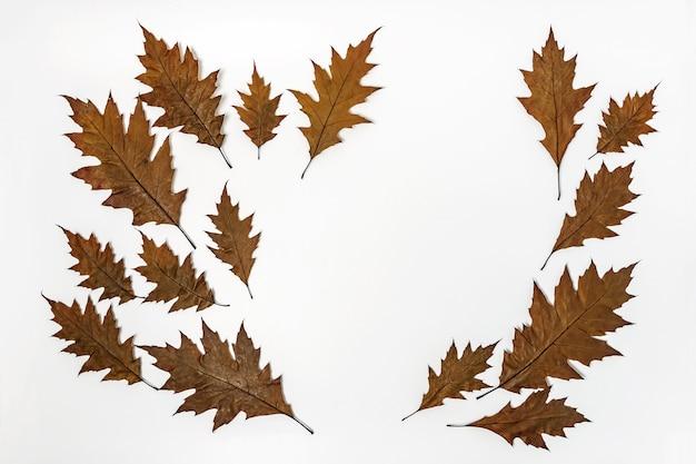 Bruin gevallen bladeren op wit oppervlak