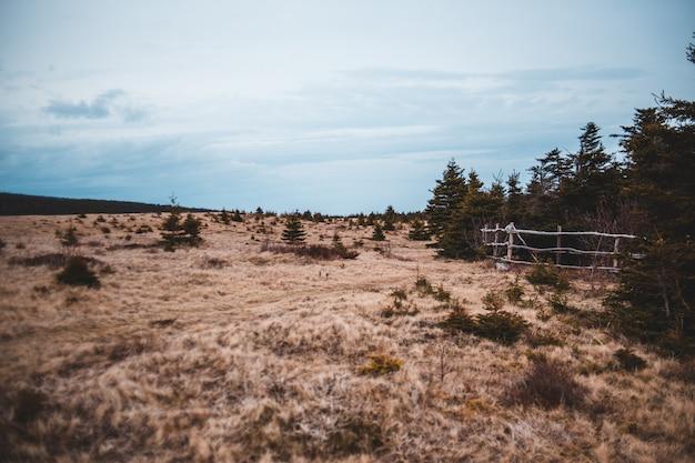 Bruin grasgebied met witmetaalomheining onder blauwe hemel overdag