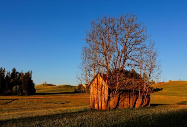 Bruin houten huis omgeven door boom