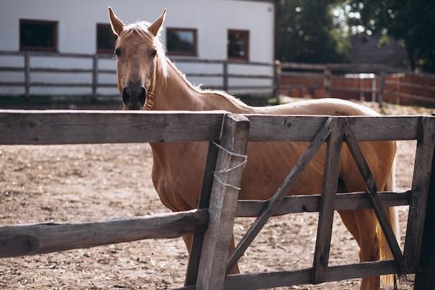 Bruin paard bij boerderij