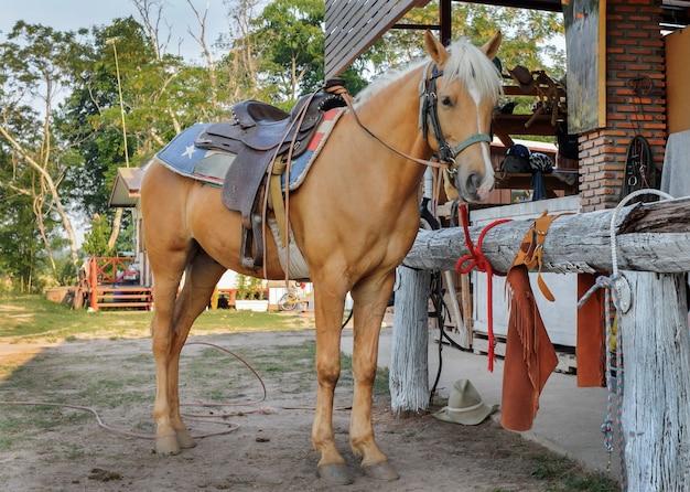 Bruin paard met teugels die zich in de boerderij bevinden.