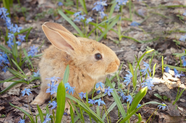 Bruin pluizig konijntje in een weide van blauwe bloemen