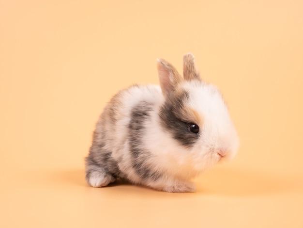 Bruin schattig babykonijn op gele achtergrond. schattige baby konijn.