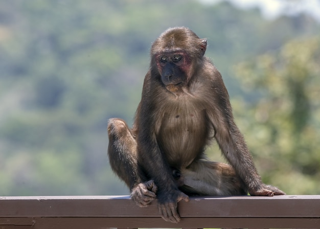 Bruine aap in zijn natuurlijke habitat