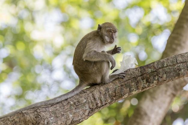 Bruine aap op boomtak