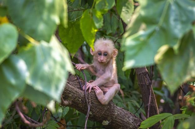 Bruine aap op bruine boomtak