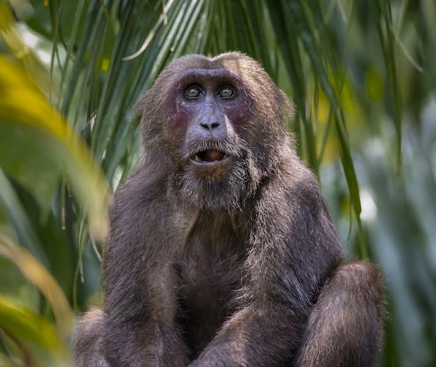 Bruine aap op groene bladplant