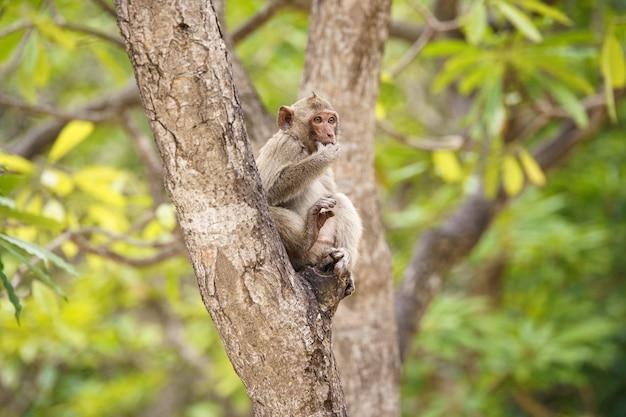 Bruine aap zittend op een boom tijdens het eten