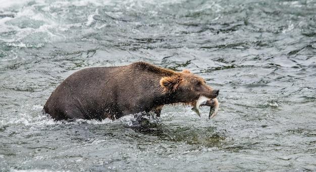 Bruine beer met een zalm in zijn bek