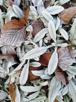 Bruine bevroren bladeren
