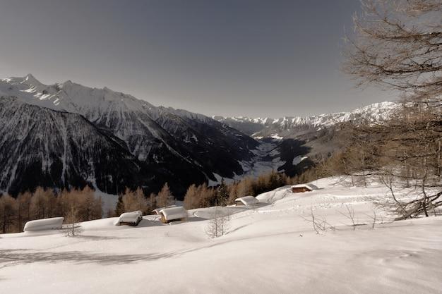 Bruine bladbomen dichtbij bergdekking door sneeuw overdag